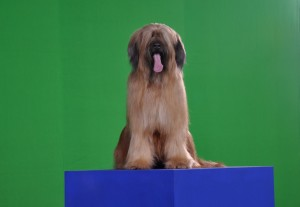 Rafaela in front of the green screen