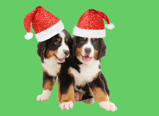 Pre-christmas movie dog training classes