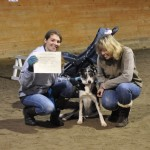 Border collie Bizzy earns her Canine Good Citizen