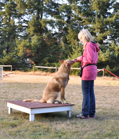 training Wiley the coydog to use an upseat