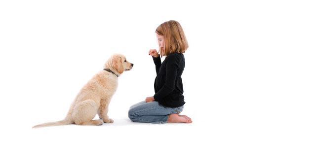 young-girl-training-puppy-to-sit-feature3