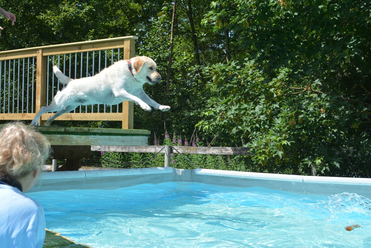 raz dives into the pool