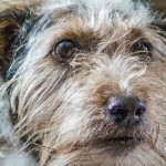scruffy-dog-cropped