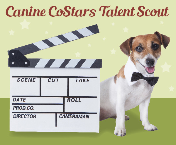 Canine Talent Scout