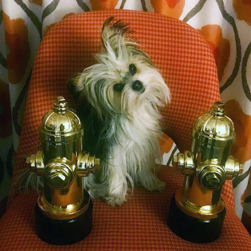 Belle wins Best Dog in Film at the CW Dog Honors