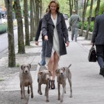 Ryan walks behind while the actress gets used to walking the 3 dogs