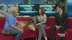 Bonnie on Global News