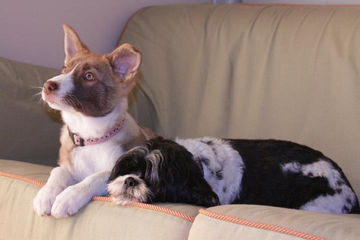 Loki and friend - photo credit Liz Werner