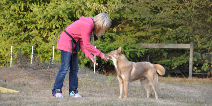 girl training coydog Wiley with food
