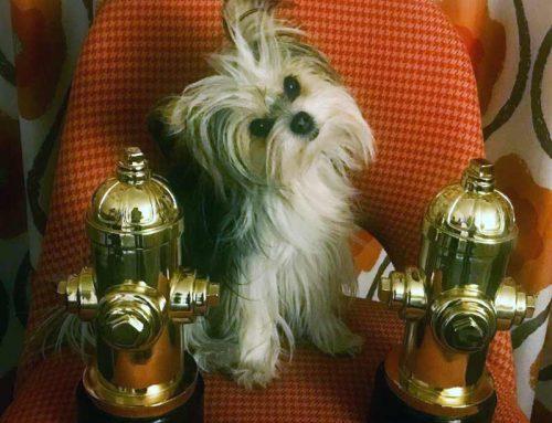 Belle Wins Best Dog in Film